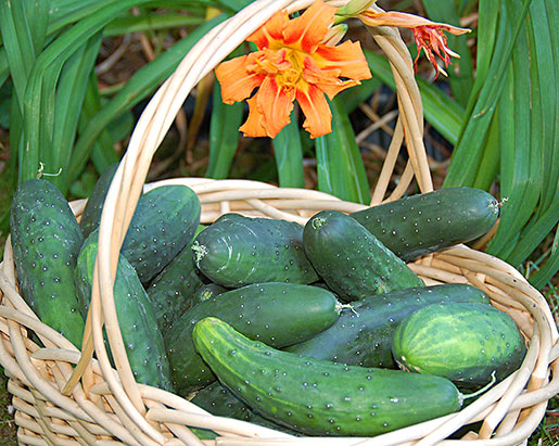 cucumbersInBasket